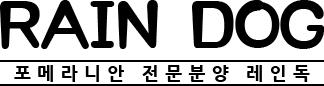 포메라니안분양전문 레인독